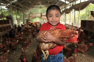 Poultry farm in Guatemala