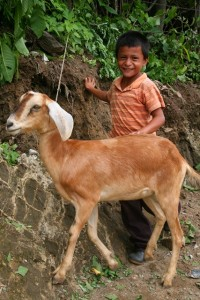 Give a Goat for Christmas - Gifts of Hope | World Help