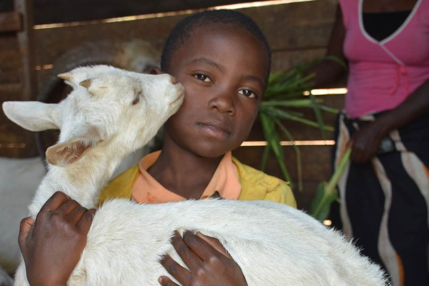 goats-lp-prod-img-4