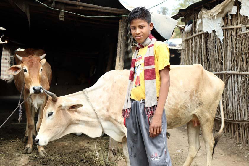 cows-lp-prod-img-1