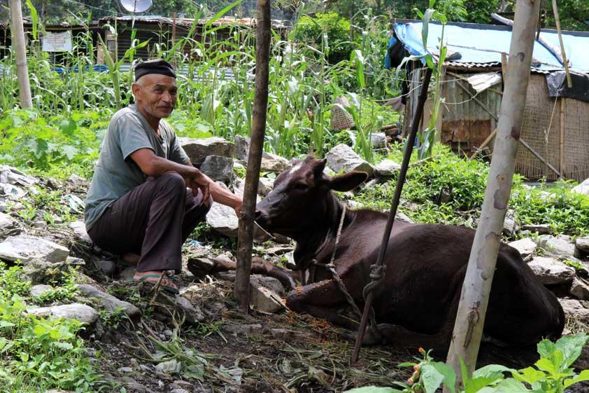 cows-lp-prod-img-4