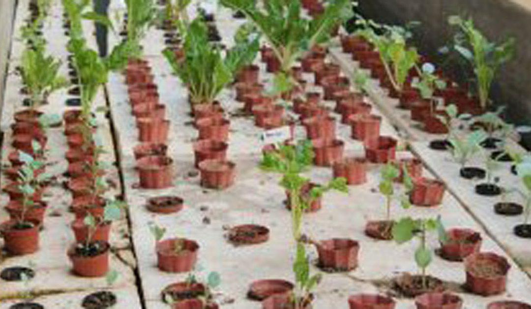 Seeds of hope: How Baker Creek Heirloom Seeds is changing lives