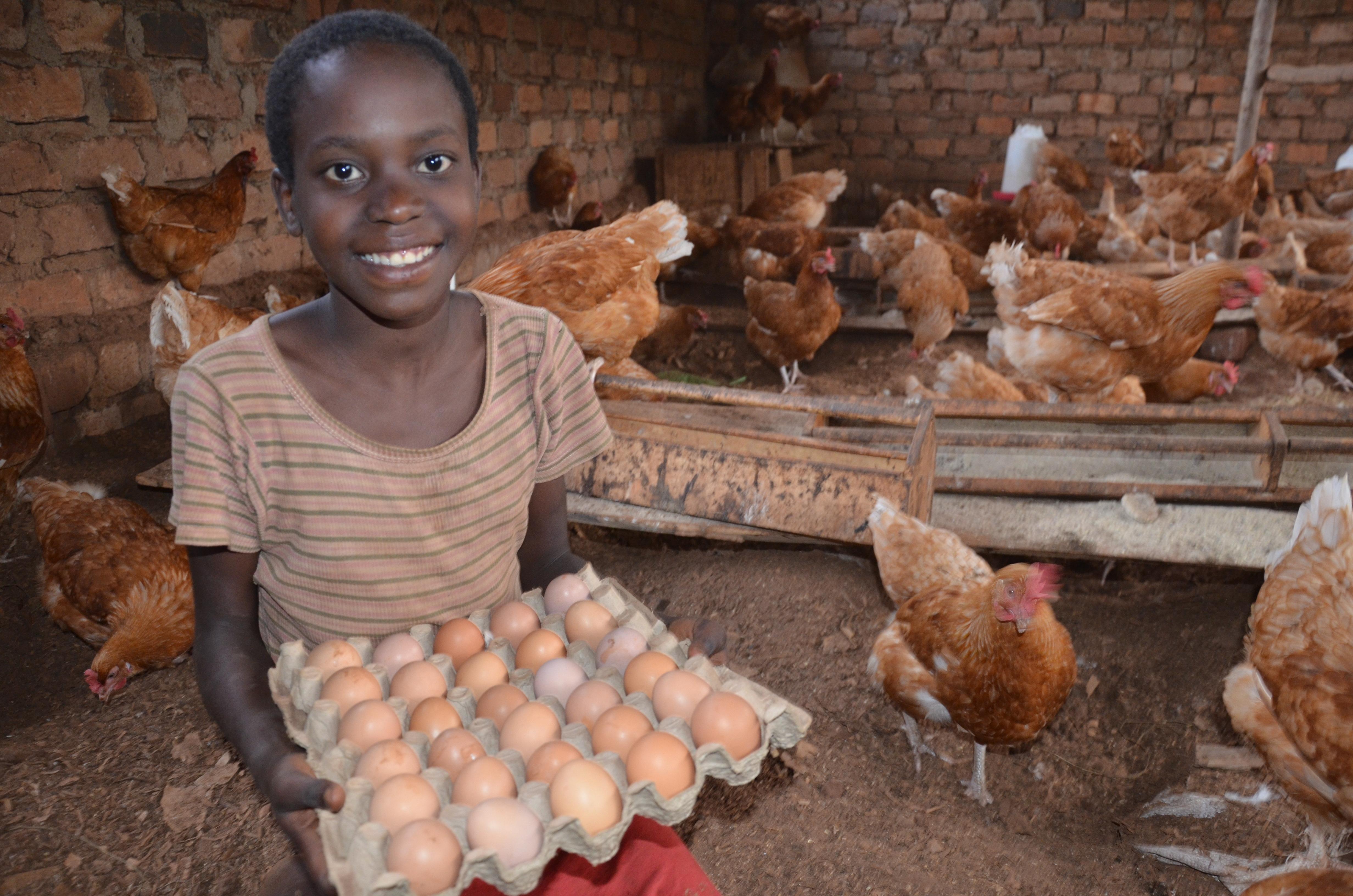 Livestock Bundle Share