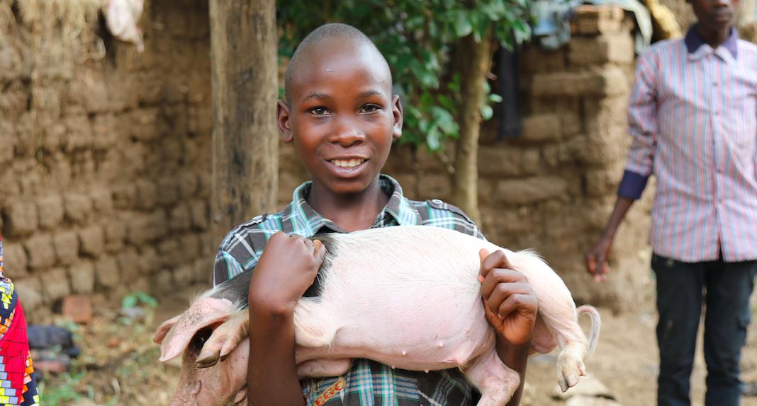 Livestock Project Report